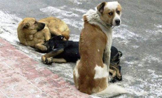 Ιωάννινα: Εγκαινιάστηκε Γραφείο Διαχείρισης Αδέσποτων Ζώων
