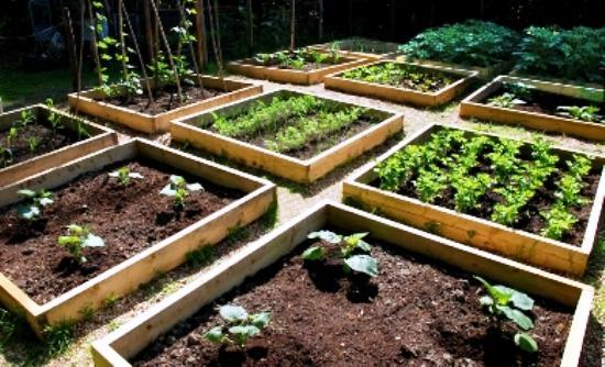 «Φτιάξε τον δικό σου λαχανόκηπο» με τη στήριξη του ΑΠΘ