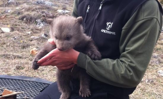 Ορφανό αρκουδάκι βρέθηκε στις Πρέσπες