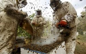 Η εναλλακτική ιατρική της Μελισσοθεραπείας