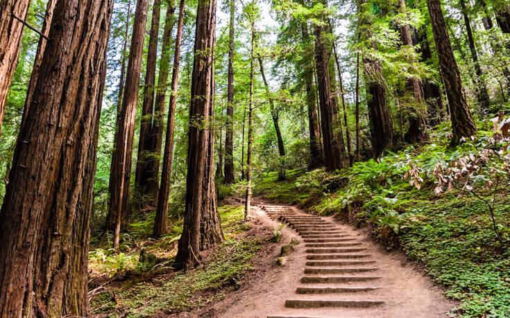 Έξι ηλικιωμένοι πιάστηκαν σε σεξουαλικό όργιο σε δάσος