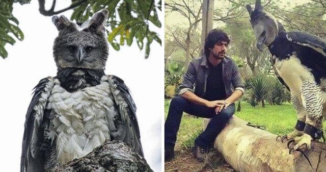 Πελώριος αετός μοιάζει με άνθρωπο ντυμένο με στολή πτηνού