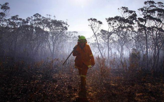 Νεκρά εκατοντάδες κοάλα από τις φωτιές στην Αυστραλία